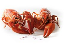 crayfish-423251_640[1]